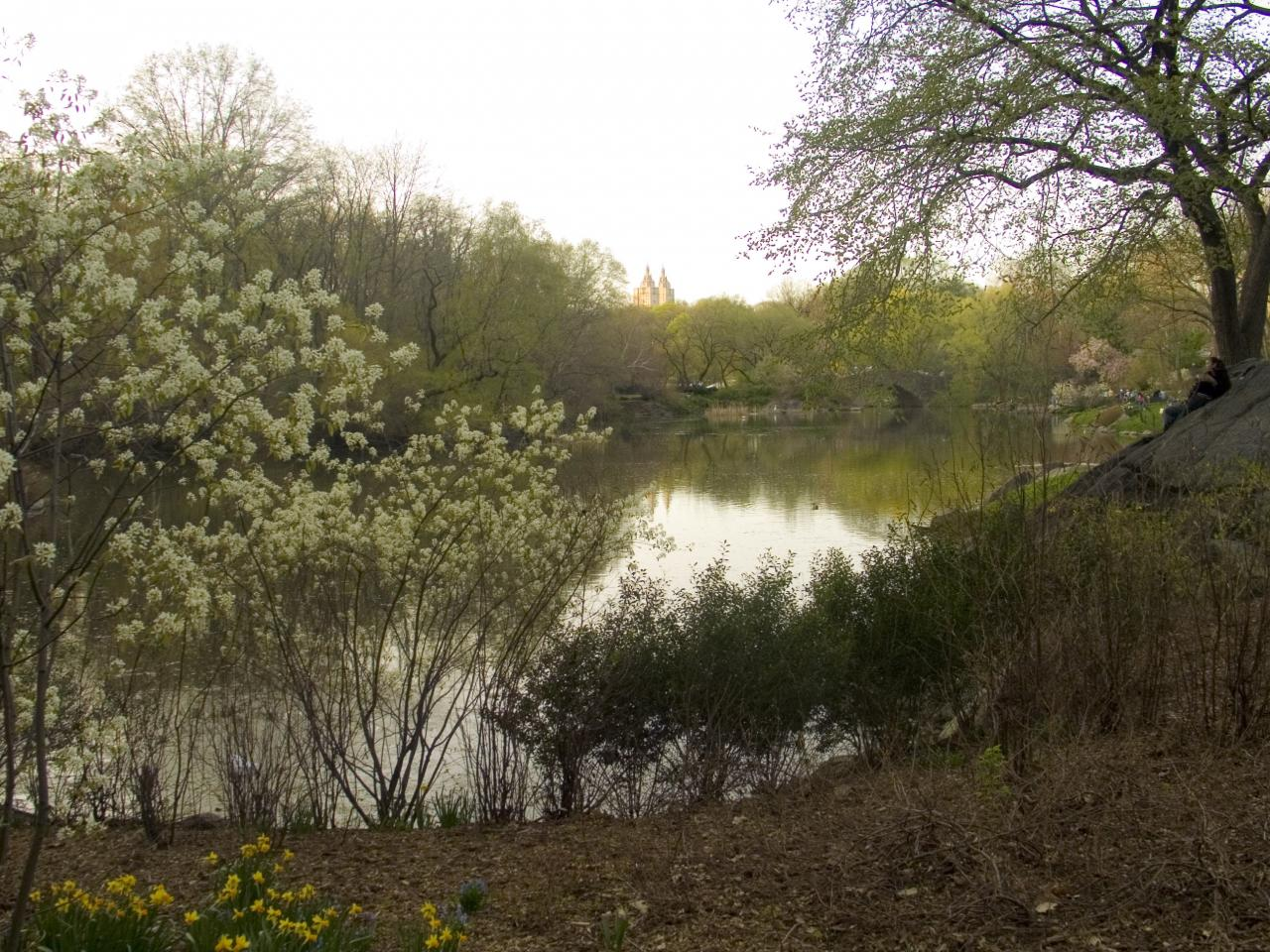 Central Park Spring, 2006, digital photograph by Orin Buck.