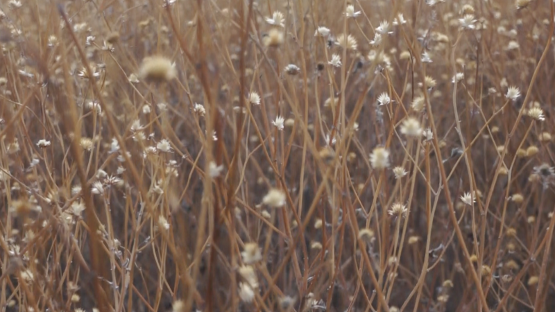 "Still from video ""Two Minutes, 2012, San Pedro Riparian Conservation Area"""