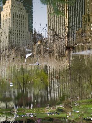 Central Park - Reflection, 2006, digital photograph by Orin Buck.